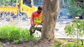 Mumifierat träd för skogsarbetarearbetare sawing arkivfilmer