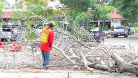 Mumifierat träd för skogsarbetarearbetare sawing stock video