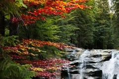 Mumlava-Wasserfall, Tschechische Republik stockfotos