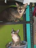 Mummia e figlia sveglie del gatto Immagini Stock