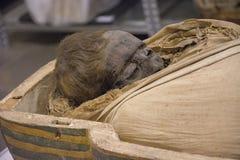 Mummia egiziana Immagini Stock Libere da Diritti