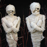 Mummies Stock Photo