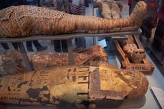 Mummies and sarcophagus in British museum in London Royalty Free Stock Image