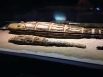 Mummified crocodiles in Egypt Stock Photo