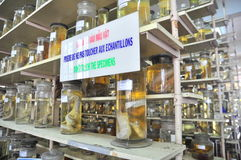 Mummified specimen of all kinds of fish and sea life in liquid are stored and showed to tourists at the Vietnam Institution of Oce. Nha Trang, Vietnam - February Stock Image