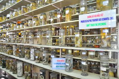 Mummified specimen of all kinds of fish and sea life in liquid are stored and showed to tourists at the Vietnam Institution of Oce Royalty Free Stock Photos