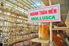 Mummified specimen of all kinds of fish and sea life in liquid are stored and showed to tourists at the Vietnam Institution of Oce Royalty Free Stock Image