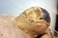 Mummy. A Real mummy close up stock images