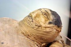 Mummy Stock Images