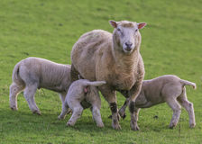 Mummy feeding her babys royalty free stock photo
