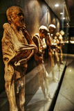 Mummy of Guanajuato, Mexico. The Mummies of Guanajuato are a number of naturally mummified bodies interred during a cholera outbreak around Guanajuato, Mexico in stock photo
