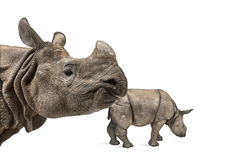 Mummy Indian rhinoceros and her baby Stock Photography