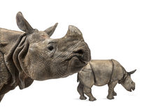 Mummy Indian rhinoceros and her baby Royalty Free Stock Photos