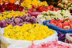 Mums and Roses for Sale Royalty Free Stock Photos