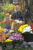 Mums and Scarecrows. Autumn Display of Mums and Scarecrows Stock Photos