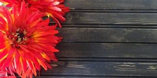Mums vermelhos com fundo de madeira Imagens de Stock Royalty Free