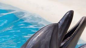Mun av en delfin lager videofilmer