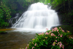 Mun Daeng waterfall and rare flower on tropical Stock Photography