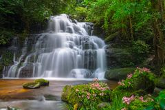 Mun dang waterfall with a pink flower foreground in Rain Forest at Phitsanulok Province, Thailand. Mun daeng Waterfall, the beautiful waterfall in deep forest at Stock Image