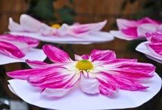 Mun des Blumenhändlers Stockfotos