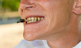 Mun med tänder som påverkas av nikotin Arkivbild