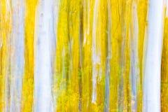 Munch álamos tremedores Imagens de Stock