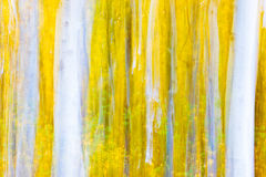 Munch's Aspens. Intentional camera movement turns fall color and aspens into an abstract and impressionistic artistic shot Stock Images