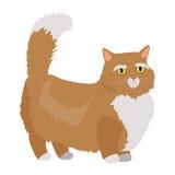 Munchkin cat Vector Flat Design Illustration Stock Images