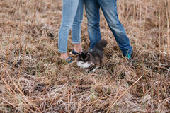 Munchkin kitten outdoors. a married couple and cat that walks by itself stock photos