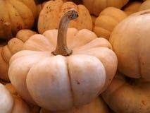 Munchkin pumpkin, Cucurbita pepo Stock Photo
