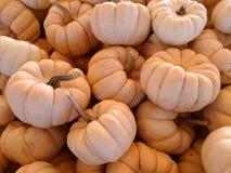 Munchkin pumpkin, Cucurbita pepo Stock Photography