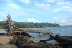 Munda Pahad plaża, Andaman obraz royalty free