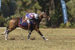Mundial Rider Action de PoloCrosse Fotografía de archivo libre de regalías