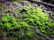 Mundo cubierto de musgo Imagen de archivo libre de regalías
