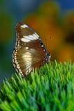 Mundo da borboleta Foto de Stock