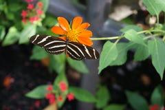 Mundo da borboleta, Florida Imagens de Stock