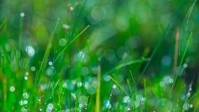 Mundo da grama da manhã Imagens de Stock Royalty Free