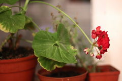 Mundo das plantas Fotografia de Stock Royalty Free