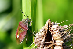 Mundo de insecto. Foto de archivo libre de regalías