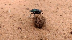 Mundo de insecto Fotos de archivo