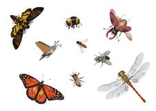 Mundo de insetos surpreendente - voo Imagens de Stock