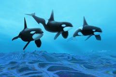 Mundo de la ballena Fotografía de archivo