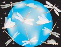 Mundo de la libélula Imagen de archivo libre de regalías