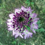 Mundo de la planta de la abeja Imagenes de archivo