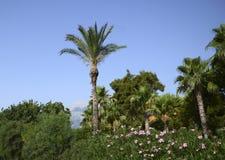 Mundo de la vegetación de Kemer Foto de archivo libre de regalías