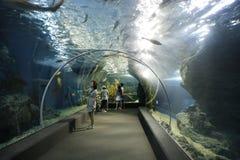 Mundo del océano de Tailandia en Bangkok Foto de archivo