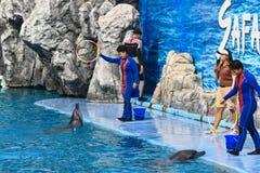 Mundo do safari da cidade de Banguecoque da mostra do golfinho fotos de stock royalty free