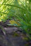 Mundo e hierba macros imagen de archivo