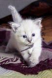 Mundo em desenvolvimento pequeno do gatinho Imagens de Stock