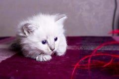 Mundo em desenvolvimento pequeno do gatinho Foto de Stock